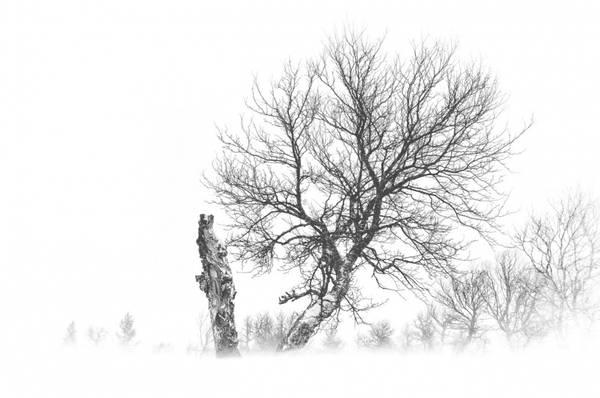 Bilde av Erik Skabo - Whiteout